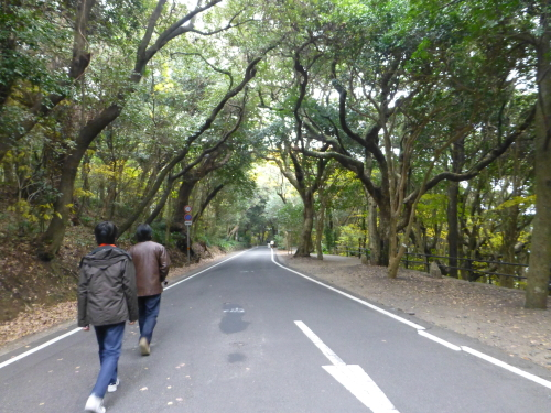 足摺亜熱帯植物園
