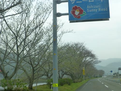 下ノ加江の桜並木