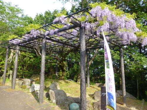 香山寺の藤棚