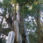 2015-1-1-杉の大杉