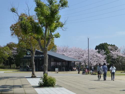 宮島SA・スタバと満開の桜