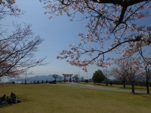 宮島SAの鳥居と桜