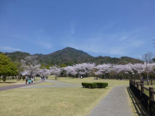 宮島SAが桜満開