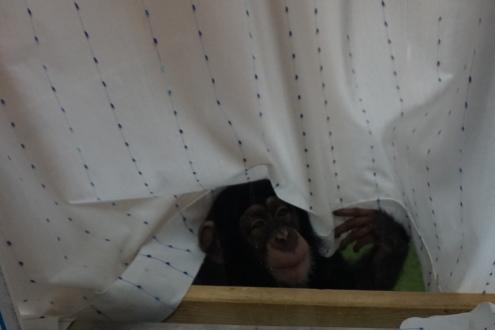 ミルキー・のいち動物園