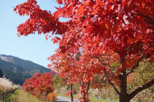 小田スキー場近くの紅葉