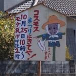 大月町コスモス祭り