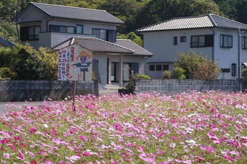 大月町姫ノ井のコスモスが満開です