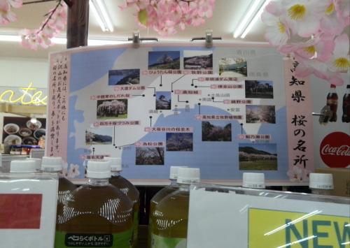 高知県の桜の名所