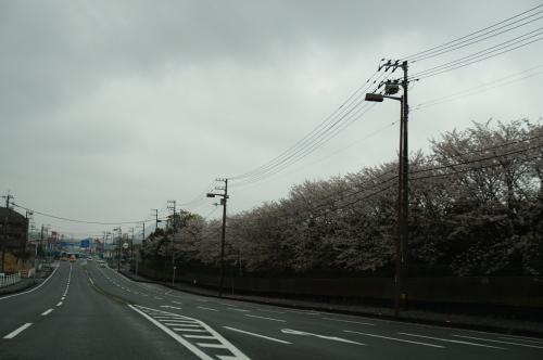 2016年高知市高須の桜