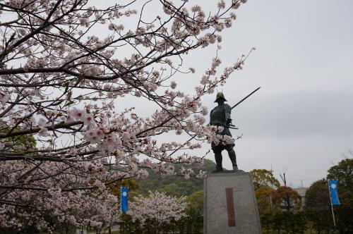 桜と長宗我部元親