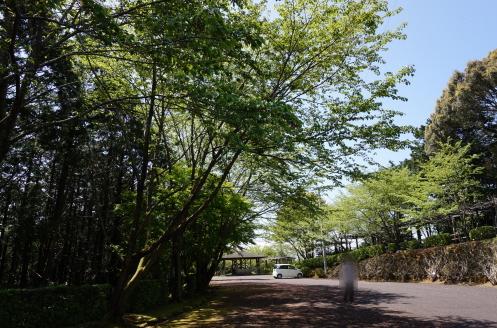 香山寺、新緑