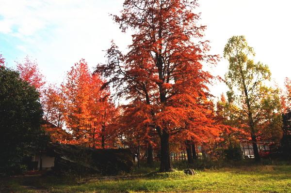 ロガーの紅葉