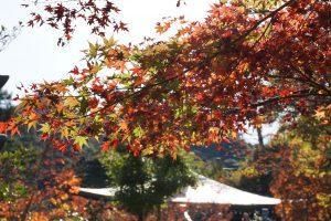 宮島-紅葉