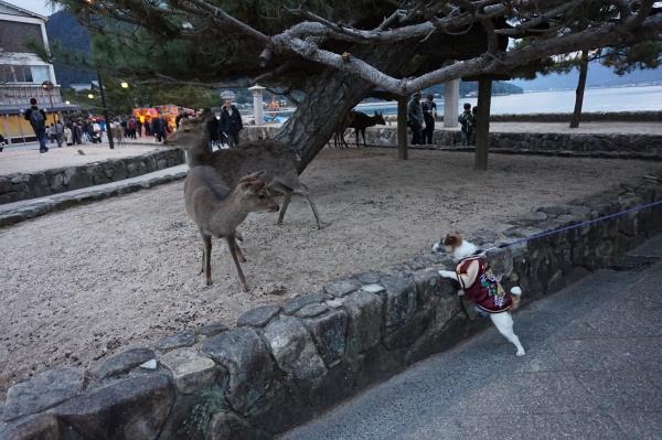 チップと鹿さん