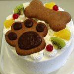 cake-dog