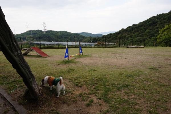 鴻ノ池SA-上り-ドッグラン
