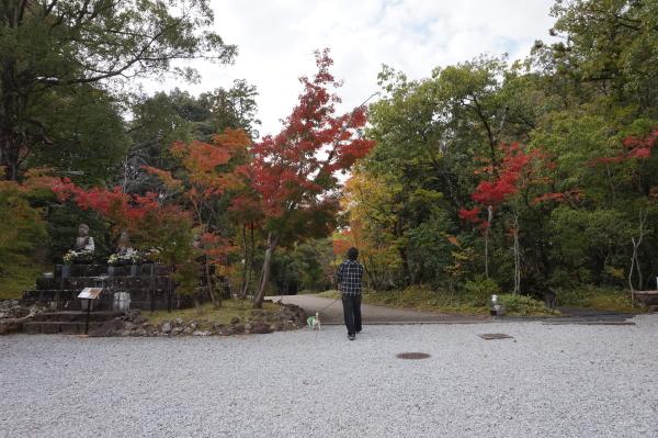 竹林寺、紅葉