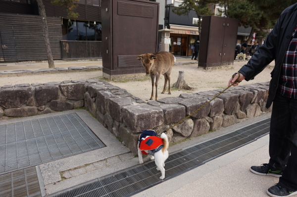 2019年-宮島-初詣